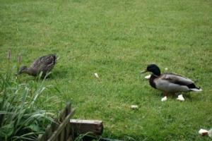 We were joined by some ducks, just to remind us that a lake used to be situated here!
