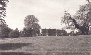 The sweet chestnut tree on the Blendon estate in the early 1900s